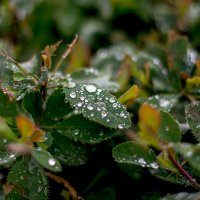 И снова дождь... :: Лидия Суюрова