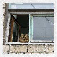 Кошка на окошке :: Сергей Коваленко