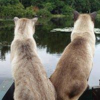 Хозяин, вижу рыбу, готовь снасти! :: Lyudmyla Pokryshen