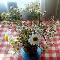 Полевые цветы :: Елена Павлова (Смолова)
