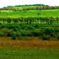 Деревца за рекой :: Милла Корн