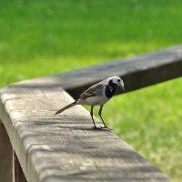 заинтерисованная птаха :: Валентина. .