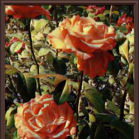 Картина «Розы» :: Владимир Бровко