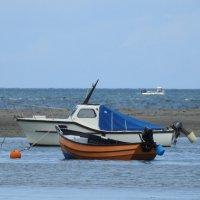 В море :: Natalia Harries