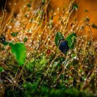 Walk through the rain forest. :: Евгений Бубнов
