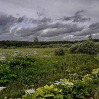 Июль дал крен на осень - то ли  еще будет :: Лара Симонова