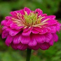 Лето и цветы :: Милешкин Владимир Алексеевич