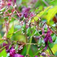 Капли дождя тоску навевают грустью , стекают дождинки.. :: Гала