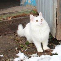 Первый снег :: Елена Минина