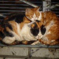 Бездомные кошки. В ожидании тепла :: павел бритшев