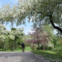 В ботаническом саду Киева :: Татьяна Ларионова
