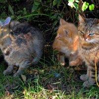 Зеленоградские кошки :: Сергей Карачин