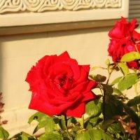 Аленький цветочек. :: sav-al-v Савченко