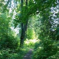 Лесные тропинки. :: Светлана Калмыкова
