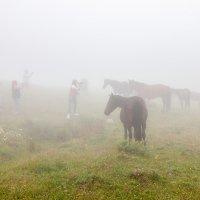 Люди и лошади :: Геннадий Мельников