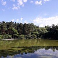 Лебединое озеро :: Андрей Кобриков