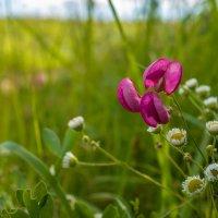 Аленький цветочек :: Виктор
