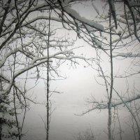 Зима, когда она похожа сама на себя :: Милана Гиличенски