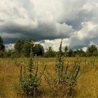 Дождливый июль :: Геннадий Худолеев