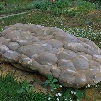 Камень :: Татьяна Са