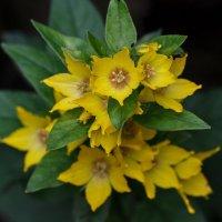 Жёлтые цветочки :: Александр Протопопов