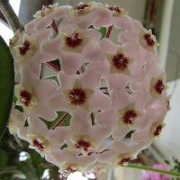Цветок на ветке - зонтиком раскрытым :: Galaelina ***