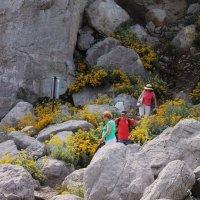 Спуск с горы. :: sav-al-v Савченко