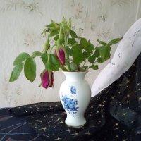 Веточки шиповника. :: Светлана Калмыкова
