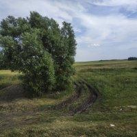 Россия с окна поезда :: Осень