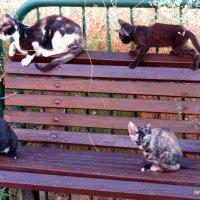 Кошки: мать и котята. :: Валерьян Запорожченко