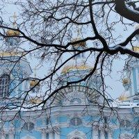 Голубая нежность... :: Elena Ророva