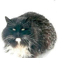 харизматичный кот :: Елена Аксамит