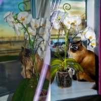Кузьма и орхидея :: Ирина Глебова