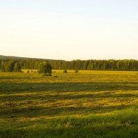 Вечернее поле :: Алексей Екимовских