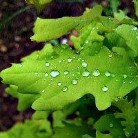 День прогулок под  дождём! :: Андрей Заломленков