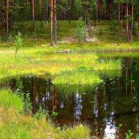 Кусочек лесного озера. :: Галина Полина