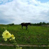 Конь  гулял на воле горной.. :: Евгений БРИГ и невич