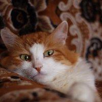 Кот в шоколаде. :: Наталья Сазонова