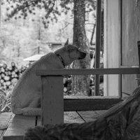 Просит убежища в собачий холод :: Валерий Михмель
