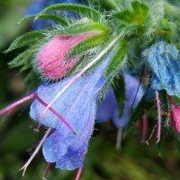 Неизвестный  цветок с горного луга :: Евгений БРИГ и невич