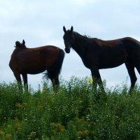 Лошадь выгуливает жеребёнка! :: Евгений БРИГ и невич