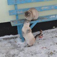 Маманя,я поел.Отпусти погулять... :: Хлопонин Андрей Хлопонин Андрей