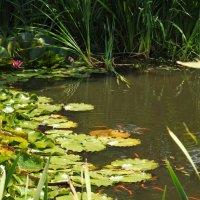 пруд с золотыми рыбками :: ИННА