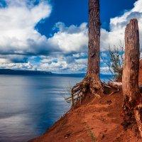 Корни дерева :: Антон Никушин