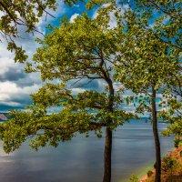 Формы деревьев :: Антон Никушин