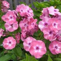 Цветы с ароматом грусти. :: Люба