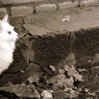 Кошка :: Елена Минина