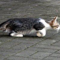 Котёнок :: Елена Минина