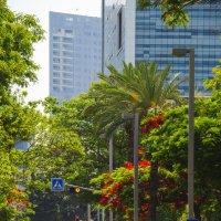 Переулок. Тель Авив. :: Alexander Amromin