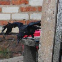 Лена, смотри - я летаю! :: Елена Минина